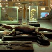 Palazzo Poggi Museum