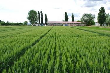 Azienda Agraria - Farm of the University of Bologna