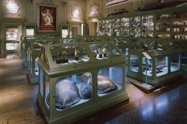 Museum of Palazzo Poggi