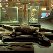 Museo Palazzo Poggi