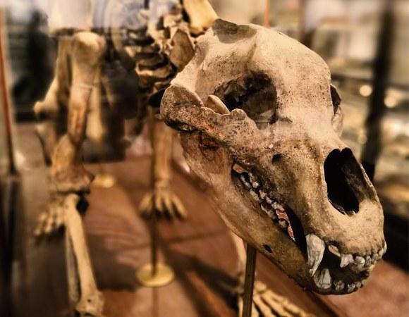 Museo Geologico e Paleontologico